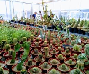 cactus, naturaleza, and vegetacion image