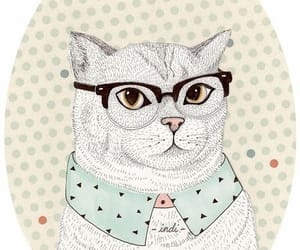 Animales, cats, and felinos image