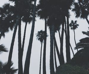 beach, cloudy, and palmtrees image