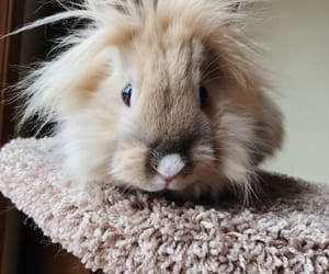 animals, bunny, and fluffy image