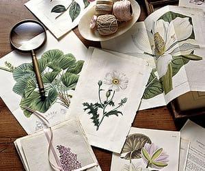 flowers, botanical, and art image