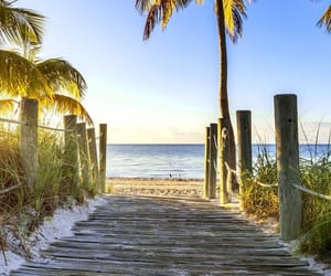 beach, palm trees, and trees image