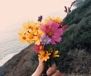 adventure, flower, and flowers image