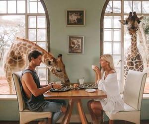 couple, giraffe, and breakfast image