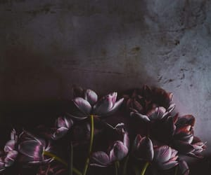 wallpaper, flowers, and iphone image