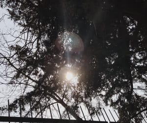 lens, light, and tree image