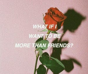 rose, more than friends, and friends image