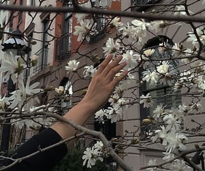 flowers, hand, and aesthetic image