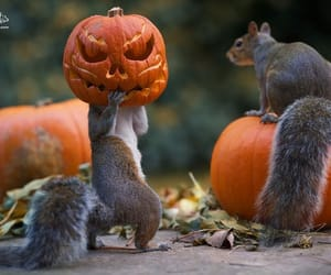 animals, autumn, and pumpinks image