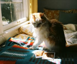 cat, animal, and indie image