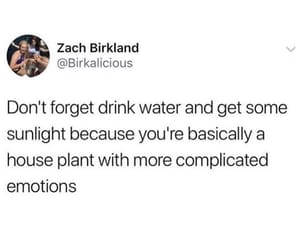 complicated, house plant, and more image
