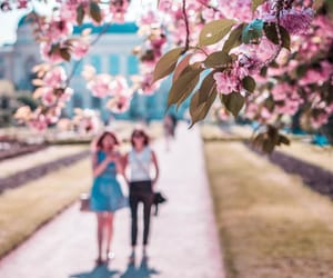 cherry blossom, pastel, and photo image