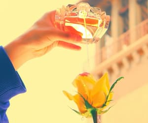 aesthetic, flower, and perfume image
