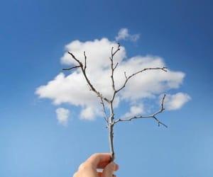 cloud, sky, and tree image