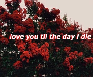 love, Lyrics, and red image