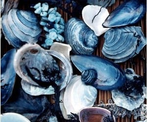 blue, shell, and sea image