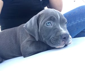 blue eyes, puppy, and titan image