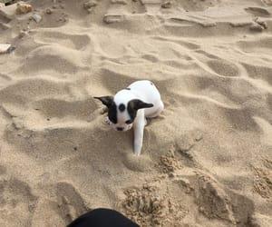 beach, black, and bulldog image