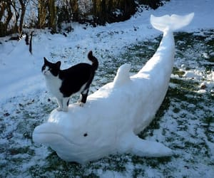 cat, snow, and dolphin image