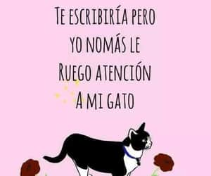 cat, drawing, and frases image