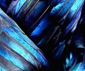 blue, feather, and wings image