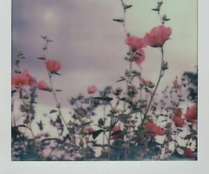 aesthetic, flowers, and polaroid image