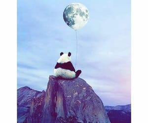 panda, moon, and sky image
