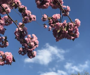 bloom, blue sky, and calm image