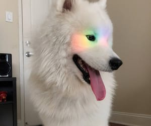 dog, rainbow, and white image