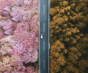 autumn and pink image