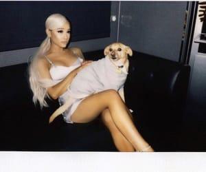 dog, pet, and ariana grande image