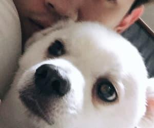 dog, puppy, and hyosub image