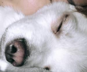 dog, puppy, and shin hyosub image