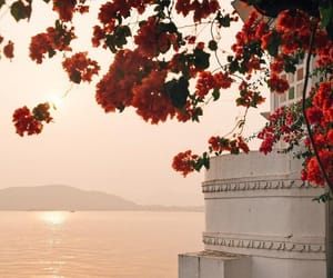 flowers, sea, and place image