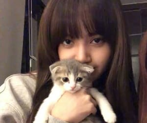 lisa, blackpink, and icon image