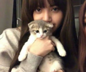 lisa, blackpink, and cat image