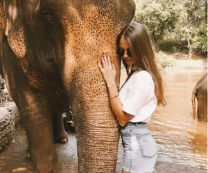 cuddling, Dream, and elephant image
