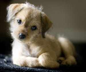 dog, mutt, and puppy image