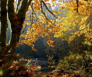 golden, hike, and maple leaves image