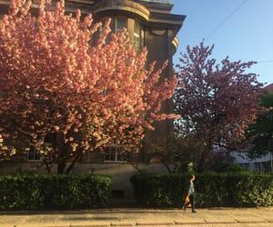 beautiful, sakura, and spring image