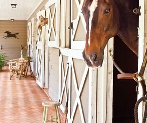 barn, country living, and equestrian image