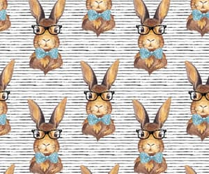 background, bow, and bunny image