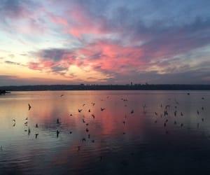 sky, sunset, and bird image