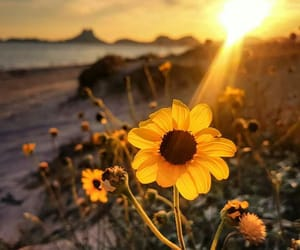 flowers, beauty, and nature image