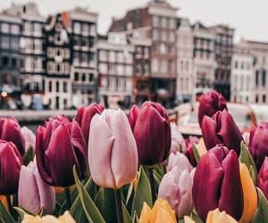 flowers, amsterdam, and beautiful image