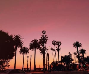 palm trees, pink, and traveling image