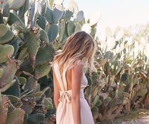 cactus and cactus desert image