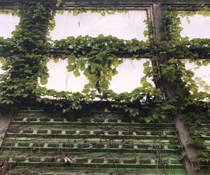 ancient, window, and green image
