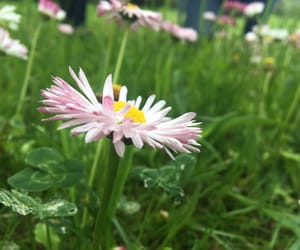 flores, flowers, and primavera image