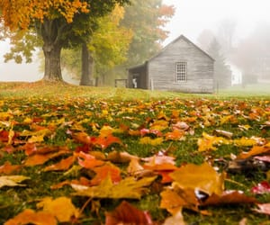 autumn, fall, and places image